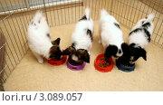 Купить «Четыре щенка едят сухой корм для собак», видеоролик № 3089057, снято 27 декабря 2011 г. (c) Сергей Лаврентьев / Фотобанк Лори