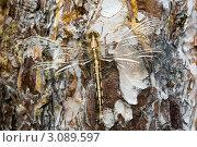 Стрекоза, сидящая на дереве. Стоковое фото, фотограф Sviatoslav Homiakov / Фотобанк Лори