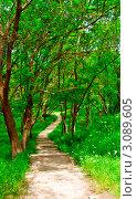 Тропинка в зеленом лесу. Стоковое фото, фотограф Sviatoslav Homiakov / Фотобанк Лори