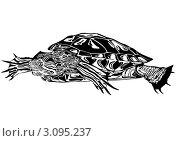 Купить «Черепаха», иллюстрация № 3095237 (c) Сергей Скрыль / Фотобанк Лори