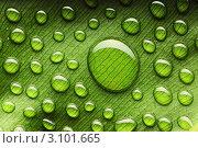 Купить «Большая капля и много мелких на зеленом листе», фото № 3101665, снято 15 апреля 2010 г. (c) Николай Охитин / Фотобанк Лори