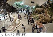 Зал Дарвиновского музея в Москве (2012 год). Редакционное фото, фотограф Максим Гулячик / Фотобанк Лори