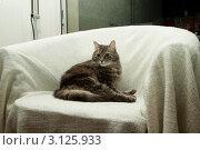 Купить «Кот в кресле», фото № 3125933, снято 1 января 2012 г. (c) Morgenstjerne / Фотобанк Лори