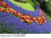 Купить «Весенние цветы в саду Кёкенхофа, Нидерланды», фото № 3138857, снято 26 апреля 2008 г. (c) Sergey Borisov / Фотобанк Лори