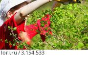 Купить «Молодая женщина подрезает кусты в саду», видеоролик № 3154533, снято 18 октября 2018 г. (c) chaoss / Фотобанк Лори