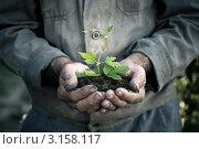 Мужчина держит в руках зеленый росток в земле. Стоковое фото, фотограф yarruta / Фотобанк Лори