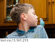 Купить «Мальчик хочет поцеловать волнистого попугая сидящего на плече», эксклюзивное фото № 3161213, снято 7 января 2012 г. (c) Игорь Низов / Фотобанк Лори