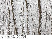 Деревья в снегу в лесу зимой. Стоковое фото, фотограф Sea Wave / Фотобанк Лори