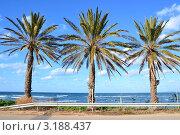 Пальмы, растущие вдоль дороги. Стоковое фото, фотограф Любовь Лапухина / Фотобанк Лори
