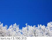 Купить «Деревья в снегу на фоне неба», фото № 3190313, снято 3 января 2012 г. (c) Михаил Коханчиков / Фотобанк Лори