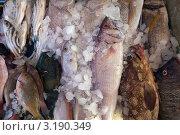 Купить «Прилавок со свежей рыбой, лежащей на льду, на рыбном базаре», фото № 3190349, снято 28 декабря 2011 г. (c) Яков Филимонов / Фотобанк Лори