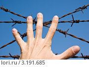 Купить «Рука на фоне колючей проволоки», фото № 3191685, снято 1 июня 2008 г. (c) Dmitry S. Marshavin / Фотобанк Лори