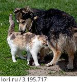Дружба кошки и собаки. Стоковое фото, фотограф Нина Ефремова / Фотобанк Лори