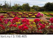 Купить «Остров Мадейра, цветущий круглый год», фото № 3198405, снято 23 декабря 2011 г. (c) Виктория Катьянова / Фотобанк Лори