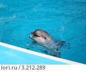 Дельфин в бассейне. Стоковое фото, фотограф Светлана Полушкина / Фотобанк Лори