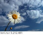 Ромашка на фоне голубого неба с облаками. Стоковое фото, фотограф Андрей Грибачев / Фотобанк Лори