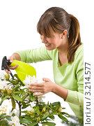 Купить «Садовник опрыскивает рододендрон», фото № 3214577, снято 1 мая 2010 г. (c) CandyBox Images / Фотобанк Лори