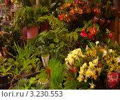 Купить «Цветочный рынок», фото № 3230553, снято 27 декабря 2011 г. (c) Виктория Катьянова / Фотобанк Лори