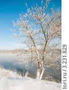 Купить «Дерево в инее на фоне голубого неба», эксклюзивное фото № 3231829, снято 3 февраля 2012 г. (c) Игорь Низов / Фотобанк Лори