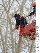 Купить «Кронирование деревьев», фото № 3236713, снято 25 ноября 2011 г. (c) макаров виктор / Фотобанк Лори