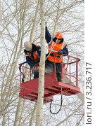 Купить «Кронирование деревьев», фото № 3236717, снято 25 ноября 2011 г. (c) макаров виктор / Фотобанк Лори