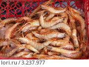 Купить «Креветки на рынке», фото № 3237977, снято 28 декабря 2011 г. (c) Яков Филимонов / Фотобанк Лори
