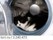 Чистая кошка в стиральной машине. Стоковое фото, фотограф Левончук Юрий / Фотобанк Лори