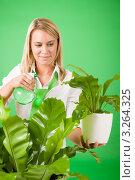 Купить «Молодая женщина опрыскивает растения в офисе с зелеными стенами», фото № 3264325, снято 24 ноября 2011 г. (c) CandyBox Images / Фотобанк Лори