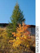 Краски осени. Стоковое фото, фотограф Марина Зимина / Фотобанк Лори