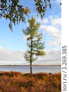 Осенняя тундра. Стоковое фото, фотограф Шкарупа Елена / Фотобанк Лори