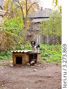 Купить «Сторож. Собака стоит на будке», фото № 3273869, снято 9 октября 2011 г. (c) Илюхина Наталья / Фотобанк Лори