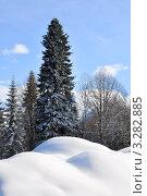 Купить «Большой сугроб под пихтой Нордманна в смешанном лесу», фото № 3282885, снято 17 февраля 2012 г. (c) Анна Мартынова / Фотобанк Лори