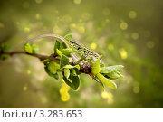 Ящерица сидит на ветке. Стоковое фото, фотограф Светлана Чебаева / Фотобанк Лори
