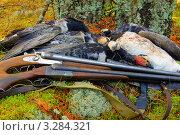 Купить «Охотничьи трофеи. Ружья и гуси», фото № 3284321, снято 3 октября 2010 г. (c) макаров виктор / Фотобанк Лори