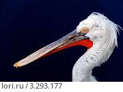 Купить «Пеликан на синем фоне», фото № 3293177, снято 17 сентября 2010 г. (c) Glen_Cook / Фотобанк Лори
