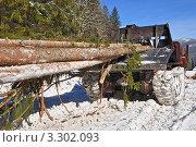 Купить «Заготовка древесины», фото № 3302093, снято 21 февраля 2012 г. (c) Швадчак Василий / Фотобанк Лори
