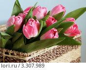 Розовые тюльпаны в плетеной корзинке. Стоковое фото, фотограф Наталья М. / Фотобанк Лори