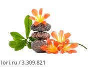 Пирамида из камней для СПА с цветами и веточкой с листьями на белом фоне. Стоковое фото, фотограф Константин Сидоров / Фотобанк Лори