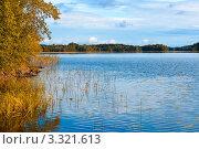 Лесное озеро. Стоковое фото, фотограф Алла Ушакова / Фотобанк Лори