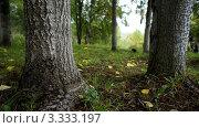 Лес. Стоковое фото, фотограф Галина Онищук / Фотобанк Лори