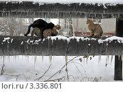 Весна пришла! Стоковое фото, фотограф Владимир ГОРОВЫХ / Фотобанк Лори