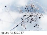 Хрустальный цветок. Стоковое фото, фотограф Андрей Самолинов / Фотобанк Лори