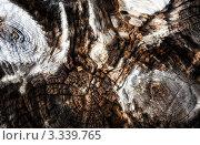 Текстура старого пня. Стоковое фото, фотограф Андрей Самолинов / Фотобанк Лори