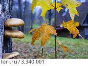 Осень. Стоковое фото, фотограф МАРГАРИТА степанова / Фотобанк Лори