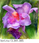 Махровая орхидея. Стоковая иллюстрация, иллюстратор Евгения Молокеева / Фотобанк Лори
