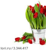 Купить «Красные тюльпаны в оцинкованном горшке», фото № 3344417, снято 18 февраля 2012 г. (c) Наталия Кленова / Фотобанк Лори