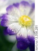 Красивый цветок крупным планом. Стоковое фото, фотограф ElenArt / Фотобанк Лори
