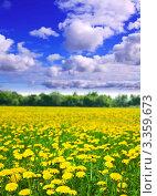 Летнее поле с желтыми одуванчиками. Стоковое фото, фотограф Яков Филимонов / Фотобанк Лори