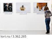 """Купить «Выставка работ финалистов конкурса """"Золотая черепаха 6"""" в городе Москве, Россия», эксклюзивное фото № 3362265, снято 3 марта 2012 г. (c) Николай Винокуров / Фотобанк Лори"""