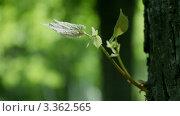 Купить «Муравей ползет по дереву», видеоролик № 3362565, снято 22 мая 2010 г. (c) Андрей Прохоров / Фотобанк Лори